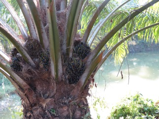 A durian tree that we saw on our hike.